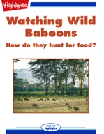 Watching Wild Baboons