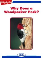 Why Does a Woodpecker Peck?