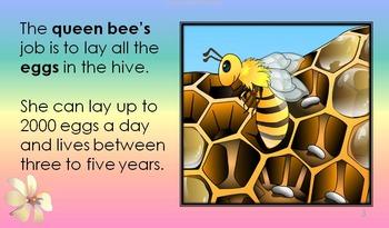 HONEYBEE FACTS: HONEYBEE'S CHORES VOLUME 4