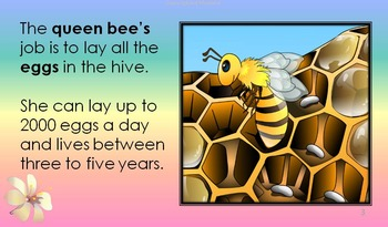 HONEYBEE FACTS: HONEYBEE'S CHORES VOLUME 4