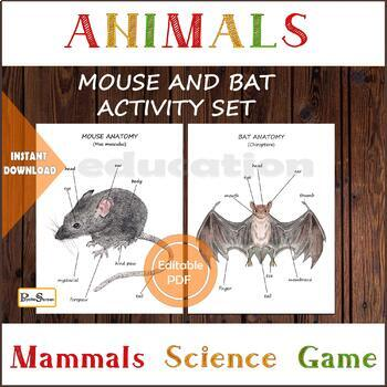 HOUSE MOUSE & BAT diagram and cards,  Anatomy set, busy binder pack