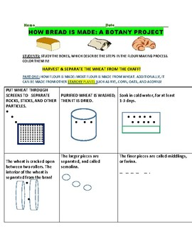 HOW BREAD IS MADE: A BOTANY PROJECT: GRADES 4-8