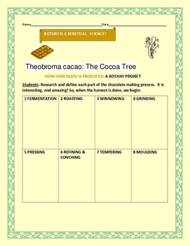 HOW CHOCOLATE IS MADE: A BOTANY PROJECT