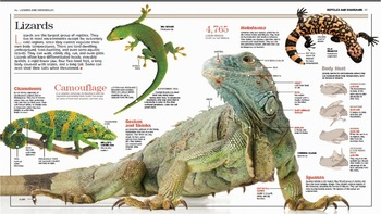 HQ Reptiles