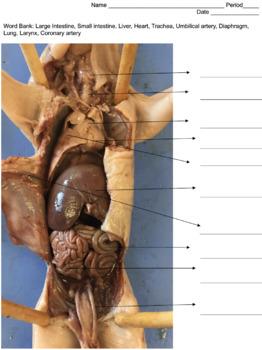HS Anatomy: Pig Dissection Interactive Adventure