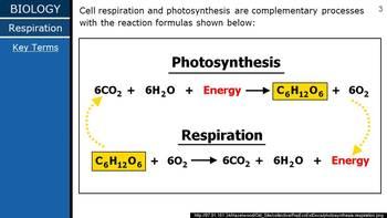 HS Biology - Biochem - Cell Respiration PPT