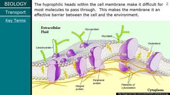 HS Biology - Cells - Membrane Transport