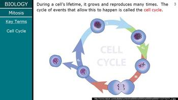 HS Biology - Cells - Mitosis PPT