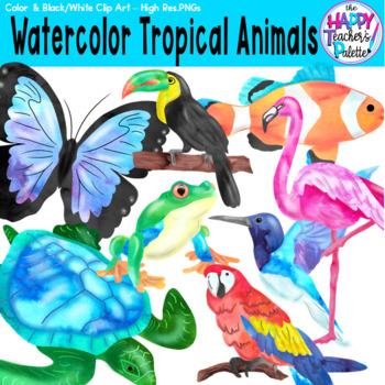 HTP Clip Art Watercolor Tropical Animals {The Happy Teacher's Palette}