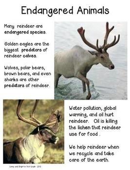 Arctic Animals Differentiated Close Reading BUNDLE