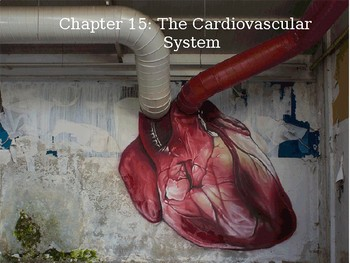 HUMAN ANATOMY & PHYSIOLOGY The Cardiovascular System