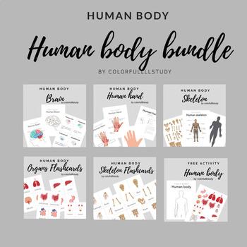 HUMAN BODY BUNDLE - by colorfullllstudy