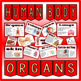 HUMAN BODY ORGANS-SCIENCE BIOLOGY DISPLAY BRAIN LUNGS HEART ETC