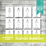 HUMAN SKELETON   MONTESSORI Printable Nomenclature Three P