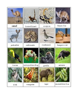 Habitat Sorting Mats - With Pictures of Real Animals