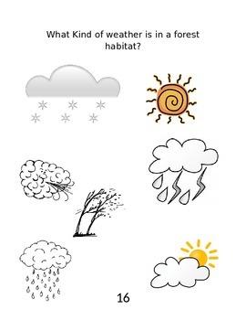 Habitat Activity Book
