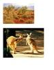 Habitat - Australian Outback