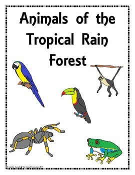 Habitat Centers and Activities for The Rain Forest