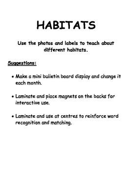 Habitat - Forest
