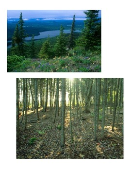 Habitat - Forest & Bears