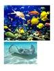 Habitat - Ocean