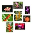 Habitat - Rainforest