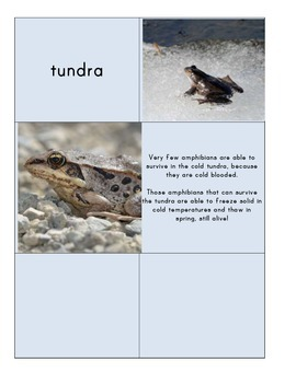 Habitat Sort Cards: Amphibians