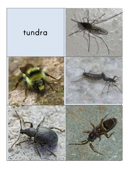 Habitat Sort Cards: Insects