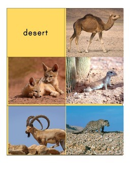 Habitat Sort Cards: Mammals