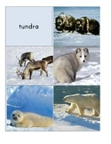 Habitat Sort Cards: Mammals