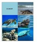 Habitat Sort Cards: Reptiles