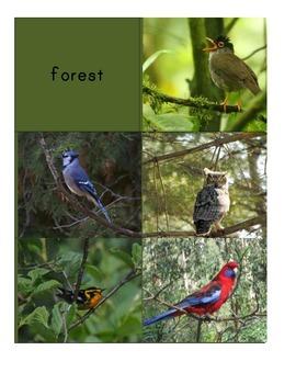 Habitat Sorting Cards: Birds