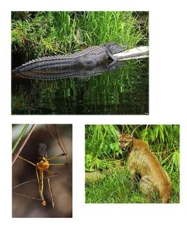 Habitat - Swamp