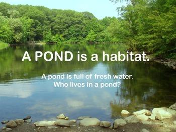 Habitats PPT: Pond, Desert, Forest, Ocean, Rainforest & Polar