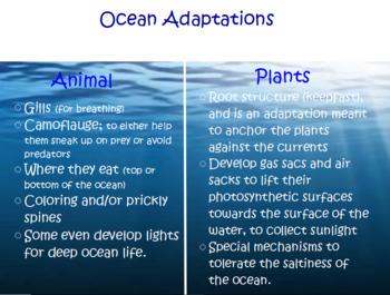 Habitats/Adaptations flipchart