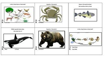 Adaptations: Ecosystems - Habitats - Biomes