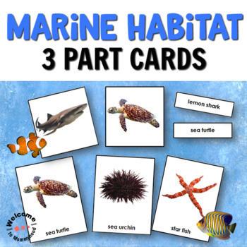 Habitats Bundle 3 Part Cards