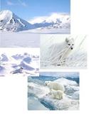 Habitats - Full Package (12 habitat poster sets)