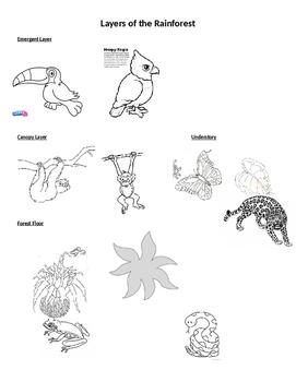 Habitats- Layers of the rainforest
