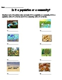 Habitats- Population or Community Quiz