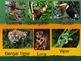 Habitats - Rain Forest