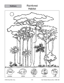 Habitats: Rainforest