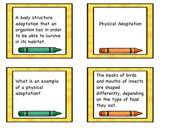Habitats and Adaptations