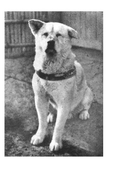 Hachikō (Hachi -  A Dog's Tale) Word Search