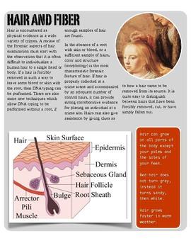 Forensics - Hair and Fiber Evidence