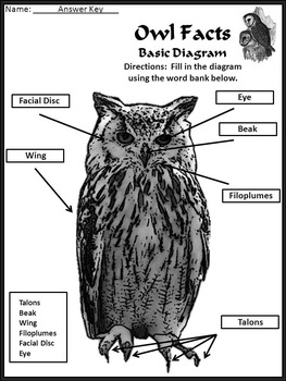 Halloween Reading Activities: Owl Facts Science Activity Packet 2nd-3rd Grade