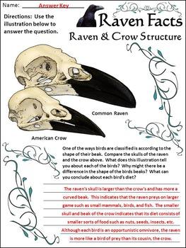 Halloween Language Arts Activities: Raven Facts Activity Packet