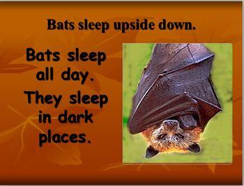 Bats: Learn All About Bats