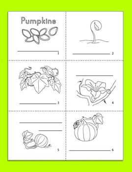 Halloween Science: Pumpkin Life Cycle Minibook in English