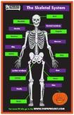 Halloween Skeletal System Poster